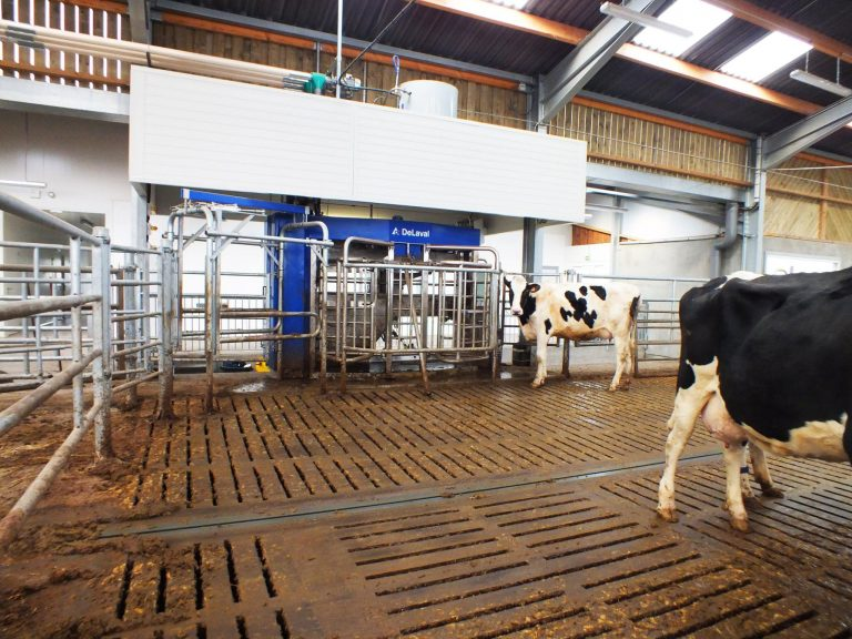 Ferme Agricole - Productions animales