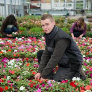 Productions horticoles