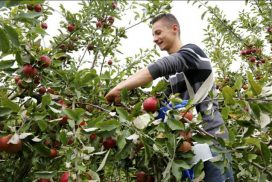Agriculture biologique: formation en BTS horticulture Institut de Genech 15/10/2014