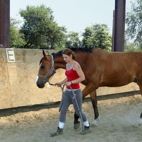 Métier du cheval, Ecole Nord, Genech