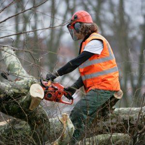 CAPa <br>Travaux Forestiers<br>(apprentissage)