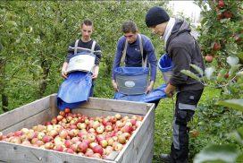 Agriculture biologique: