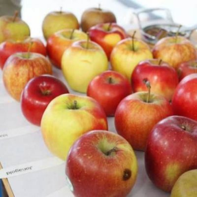 Etudes des variétés de pommes