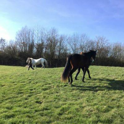 Débourrage chevaux