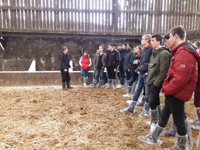Visite d'un élevage de charolaises