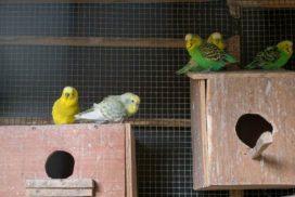 Oiseaux animalerie