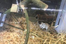 animalerie-gerbille-1