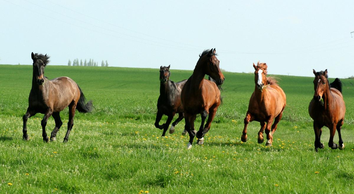 chevaux liberté centre équestre