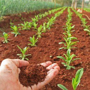 CAPa Métiers de l'Agriculture en 1 an (FC)
