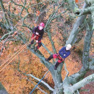 Grimper, se déplacer et travailler en sécurité dans l'arbre