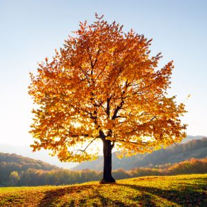 Analyse et diagnostic de l'état de l'arbre
