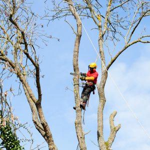 Démontage des arbres avec ou sans rétention