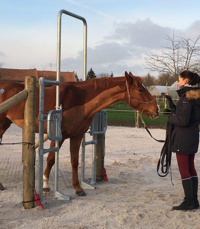 entrée des chevaux
