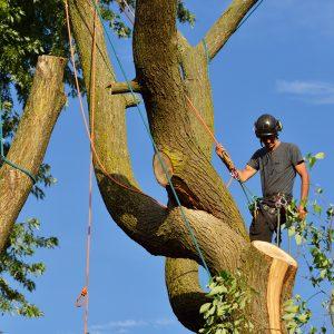 Techniques de grimpe et de déplacement dans l'arbre – perfectionnement